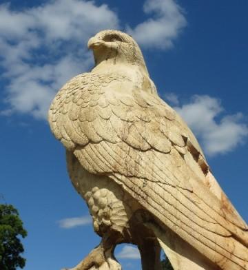 11c.Darley-Falcon